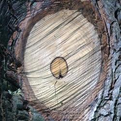investissement en groupement foncier forestier